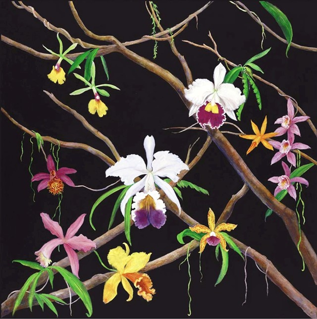 orchids, orchids on branches